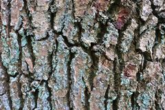 Close up view on beautifully detailed tree bark of oaks and other trees. Found in northern european forests stock images