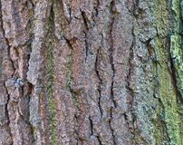 Close up view on beautifully detailed tree bark of oaks and other trees. Found in northern european forests royalty free stock images