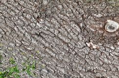 Close up view on beautifully detailed tree bark of oaks and other trees. Found in northern european forests stock image
