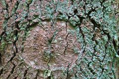 Close up view on beautifully detailed tree bark of oaks and other trees. Found in northern european forests royalty free stock image