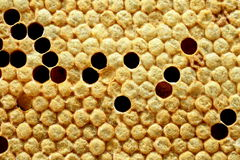 Close up view of bees,bee larvae on honey cells. Royalty Free Stock Photos