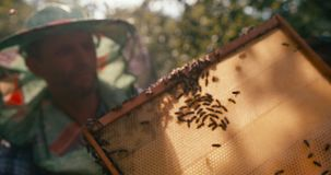 Close-up view of the bees working on the honeyboms. The blurred background of the beekeeper in hat veil holding the stock footage