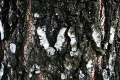 Close up view of Birch bark for background texture. stock images