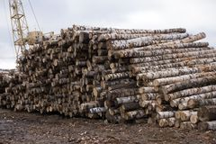 Close up view of birch logs stack . stock photos
