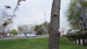 Close-up view of blooming flower tree. stock footage