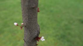 Close-up view of blooming flower tree. stock video
