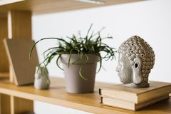 Close up view of books and plant in flowerpot on wooden bookshelf Stock Photos