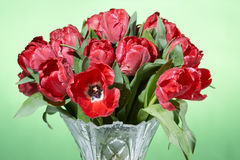 Close up view of bouquet of red fresh spring tulips with water splashes in vase. Stock Photos