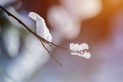 Branch covered with snow and ice. Close up view of a branch covered with snow and ice, a background of sunlight toned Stock Image