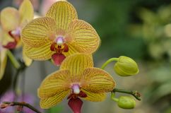 A Close Up of Beautiful Orchids stock photography