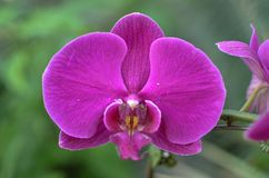 A Close Up of Beautiful Orchids royalty free stock photos