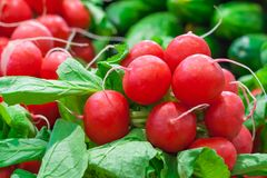Close up view of a bunches of radishes. Close up view of a several bunches of radishes with shallow depth of field background Royalty Free Stock Photo