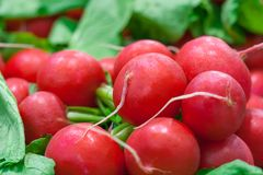 Close up view of a bunches of radishes. In the store Royalty Free Stock Images
