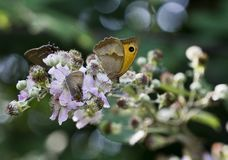 Close-up view of butterflies royalty free stock images