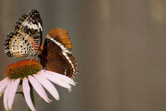 Close-up view of butterflies perched on flower Stock Images