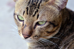 Close-up view of cat's eye (Selective focus - Animal lover background). A cat found in front of my home. His eyes are very interesting Royalty Free Stock Photo