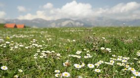 Close up view of chamomile in the mountainous Alps region, with a distant small village. Non-urban area. No people stock video