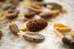 Clean, cut morels in close up. Close up view of clean, cut morel mushrooms Royalty Free Stock Photography