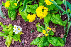 Close up view on colorful flowers and green plants, well-kept pa Royalty Free Stock Image