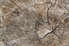 Close up view of cut log with deep cracks royalty free stock image
