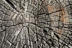 Close-up view of the cut tree. A close up view of an weathered old cut of tree. Background Royalty Free Stock Photos