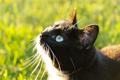 Close up view of a cute black cat with blue eye on green grass background. stock images