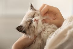 Close up view of cute little kitten. With owner royalty free stock photos