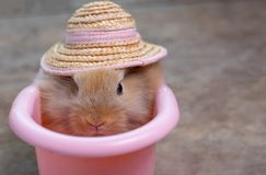 Close up view of cute little light brown bunny rabbit with hat in pink bathtub on wood table stock photography