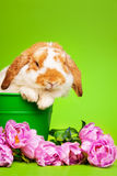 Close up view of cute rabbit on green background Stock Photography