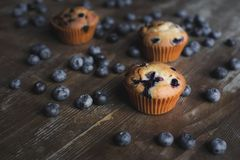 Delicious cupcakes with blueberries Stock Images