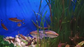 Close-up view of the different fish swimming in the aquarium. Close-up view of the different fish swimming in the aquarium stock footage