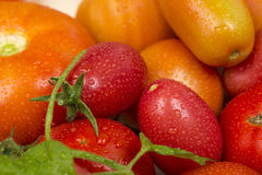 Close-up view of different fresh green and red tomatoes with waterdrops Royalty Free Stock Image