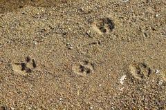 Close up view of dog footprint royalty free stock image