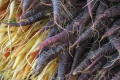 Purple and Yellow Carrots in a New York Farmers Market. A close-up view of the ends of some colorful carrots stacked in a farmers market stall royalty free stock photos