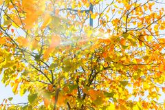 Close up View of Fall Colorful Leaves Stock Photo