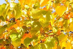 Close up View of Fall Colorful Leaves Royalty Free Stock Photos