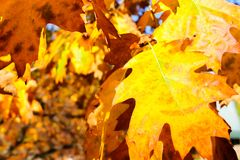 Close up View of Fall Colorful Leaves Stock Photography
