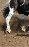 A close up view of a fast running horse and flying dirt. A horse galloping and skidding while kicking up dirt Royalty Free Stock Photos