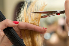 Close up view of female hairdresser hands cutting hair tips Royalty Free Stock Image