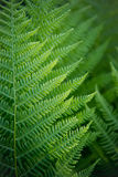Close-up view of ferns in the forest Royalty Free Stock Images