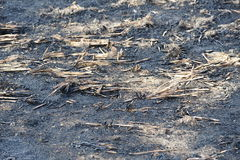 Burned crop field. Royalty Free Stock Photo