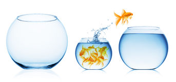 Close up view of fish bowl isolated Stock Photography