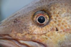 Close up view of fish eye isolated. Beautiful backgrounds.  royalty free stock photography