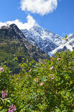 Flowering bushes and mountains covered with snow stock photos