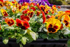 Close up view of flowers in city garden royalty free stock image
