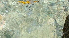 Close up view of flowing clear water and wave around the stone of river bed. Loop stock footage