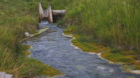 Close up view of forest stream flowing in green fresh grass. stock video footage