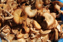 Close up view on fresh bright mushrooms Stock Images