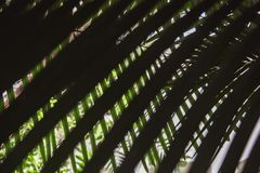 Close-up view of fresh green palm tree leaf stock photos