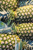A close-up view of fresh pineapples at the market. Of Madrid, Spain Royalty Free Stock Photography
